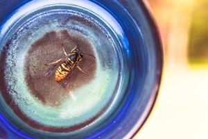 animal-bottle-glass-561-825x550