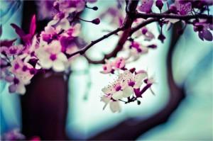 blur-flowers-nature-471-827x550